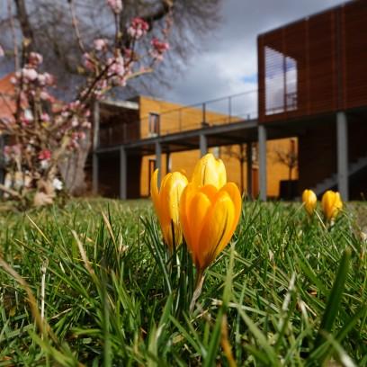 Frühlingsvorboten im Zinzendorfgarten. Foto: © Schreiter/EAT