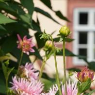Foto: Garten der Evangelischen Tageseinrichtung Zinzendorfhaus, wo die Evangelische Akademie Thüringen ihren Sitz hat. Foto: Annekathrin Härter/ EAT